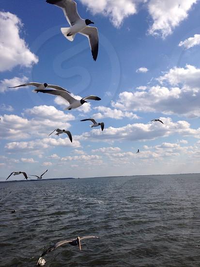 Golden Isles Gulls photo
