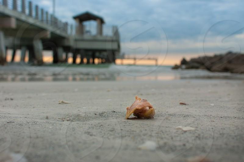 beach shell pier sunset photo