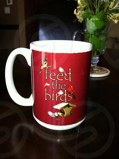 CUP=feed the birds photo