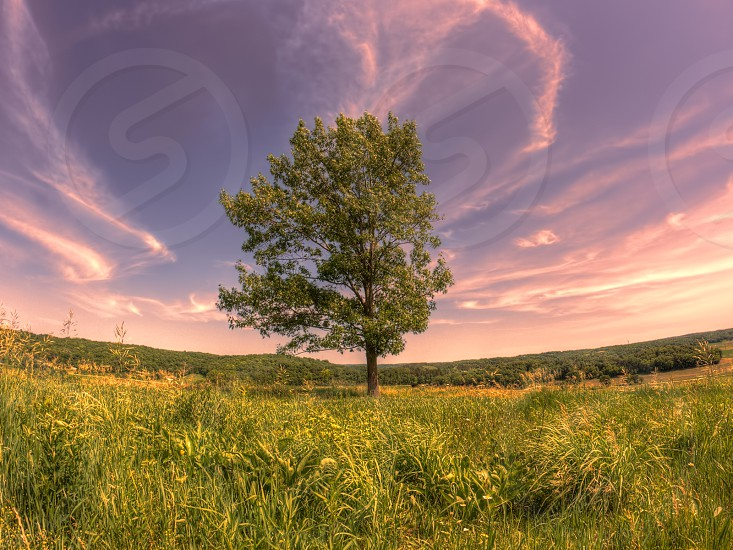 tree landscape leaves foliage midwest hue bluff june vivid vibrant outside twilight country sunset evening warm warmth vibrance saturation colorful color colour colors hill sun clouds cloudy wispy orange summer purple grass prairie outside outdoors adventure explore discover blue nature light green sky otherworldly surreal heavenly heaven ether ethereal photo