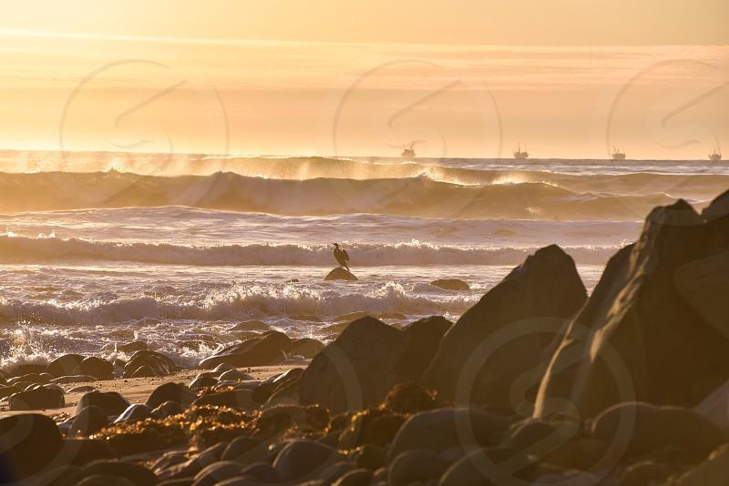 bird standing on rock at ocean waves photo