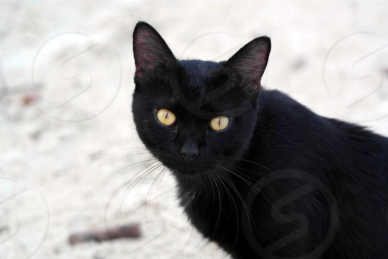 close up photo of black short fur cat during daytime photo