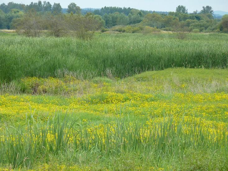 marsh meadow flowers photo