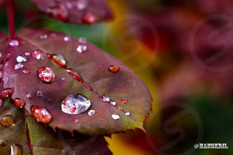 Dew drop. photo