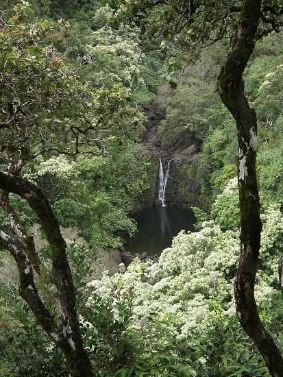 hawaii waterfall treesgreen photo
