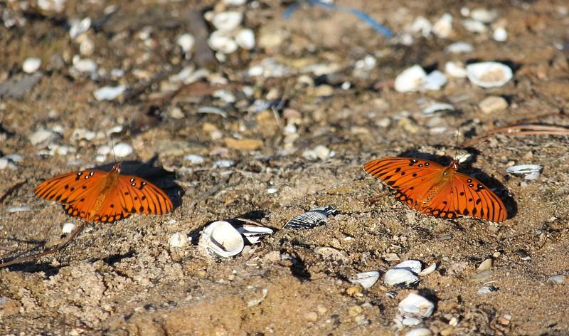 A Pair of Butterflies on a Beach photo
