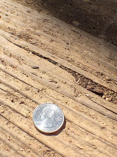 silver usa coin  photo