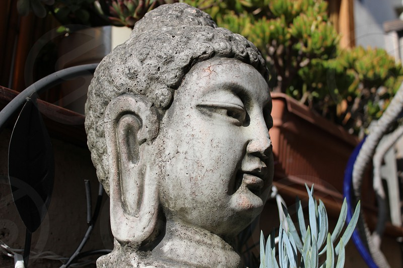 Buddha. photo