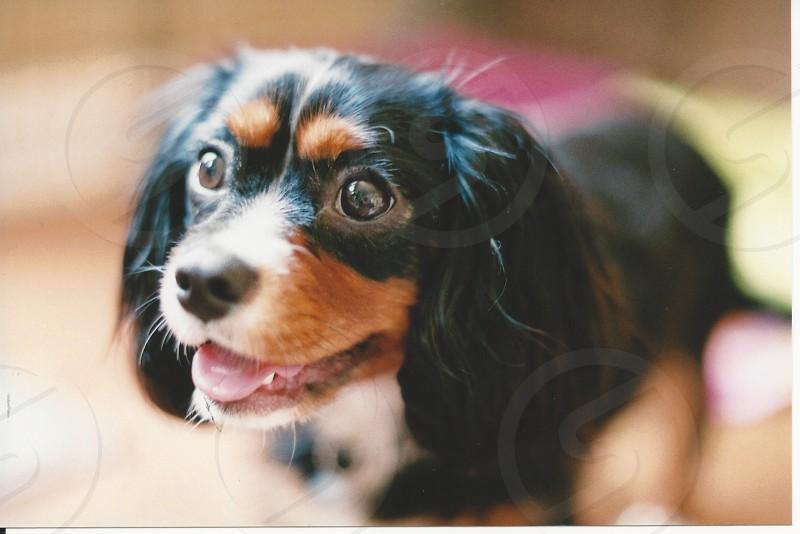 Adorable puppy film close face photo
