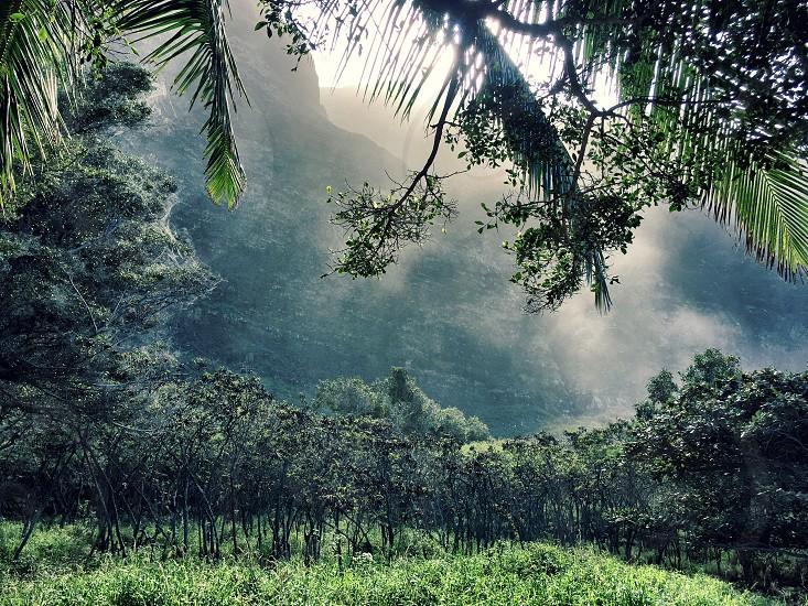 Beach; Kauai; water; ocean; sand; jungle; rocks; palm trees; mist; coast; sunlight; na'pali; cliffs  photo