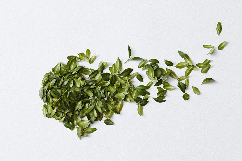 Composition of green leaves represented in form of over white background photo