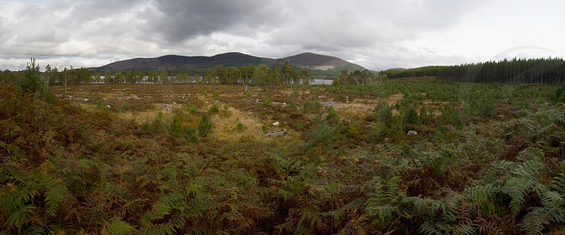 Glenmore Forest Park in the Cairngorms National Park in the Scottish Highlands of Scotland UK photo