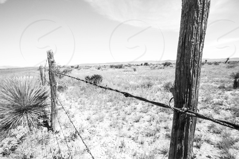 West Tx Cattle Ranch photo