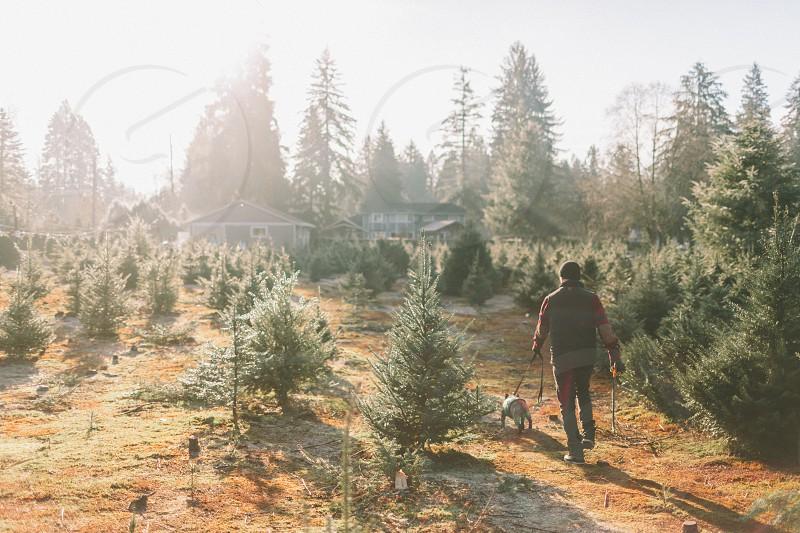 A man and his dog at the Christmas tree farm.  photo