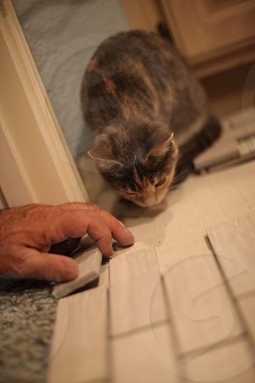 A kitten helps lay tile on a bathroom floor. photo