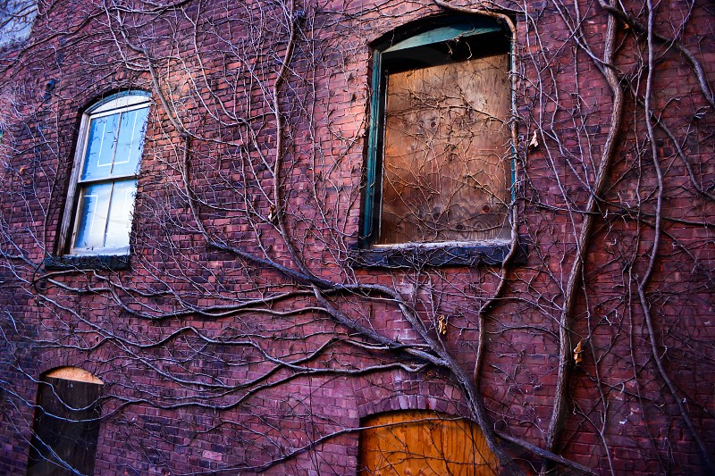 Brick wall with crazy vines; abandoned building; boarded up windows; creepy photo
