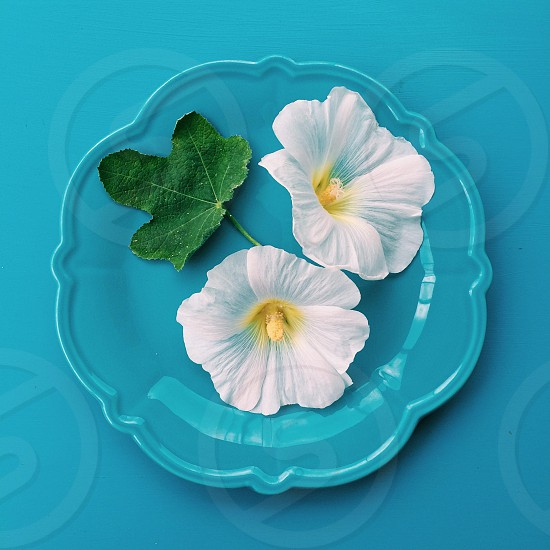 white flower on plate photo