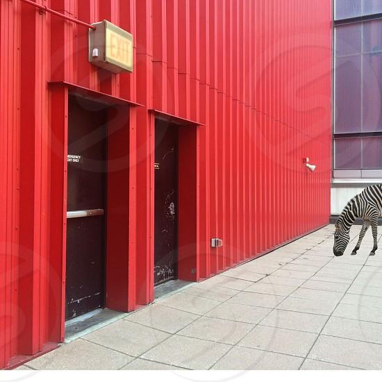 zebra near brown door photo