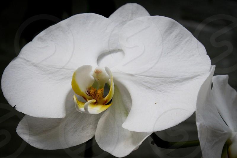white and yellow flower macro photo