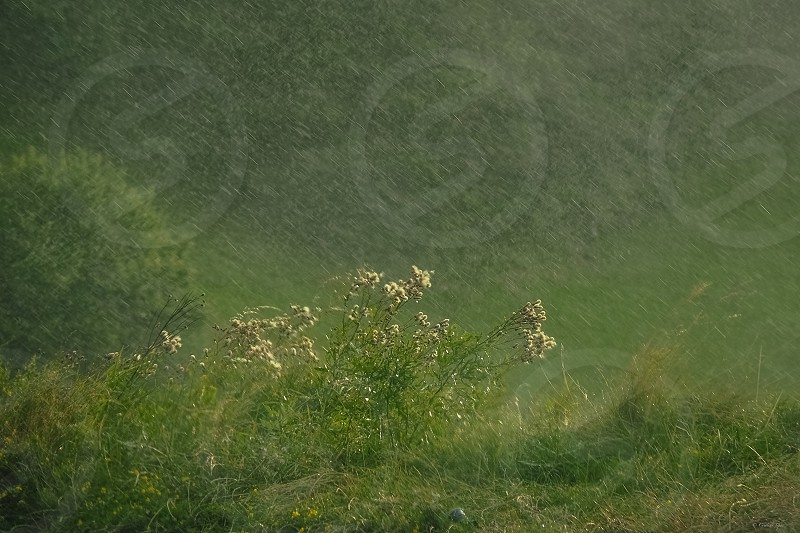 rainingdropswaterstormygreennatureweathercountryside photo