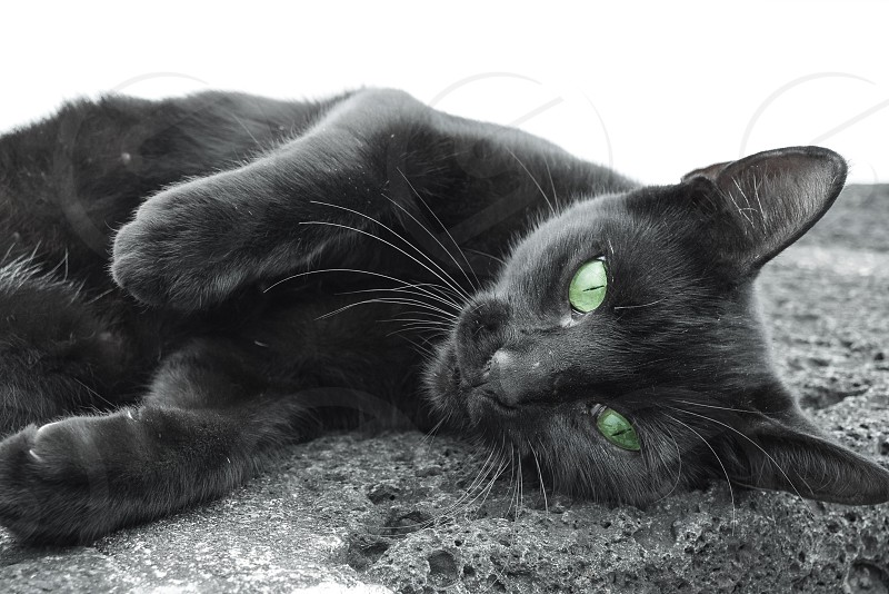 black cat with green eeys photo