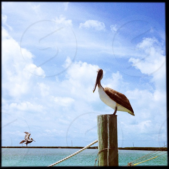 Key west  Florida  photo