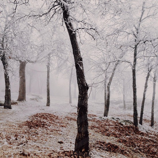 snow area with tree photo