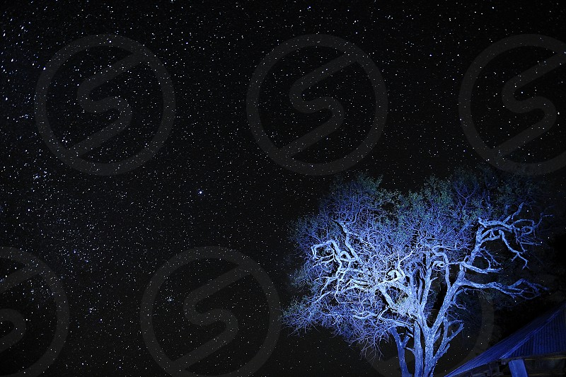 Night and star in Serengeti Park Tanzania photo