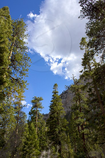 worm eyeview of green trees photo