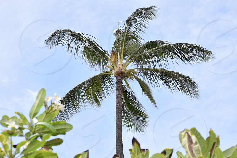 Palm trees sway in the wind in Hawaiʻi! This photo is very tropical adventurous and light to the eye.  photo
