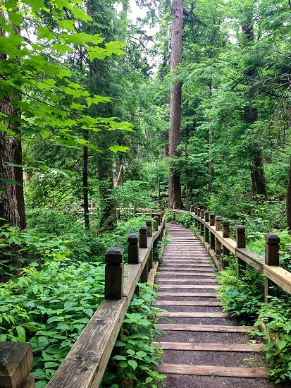 Swallow Falls State Park forest boardwalk stairs photo