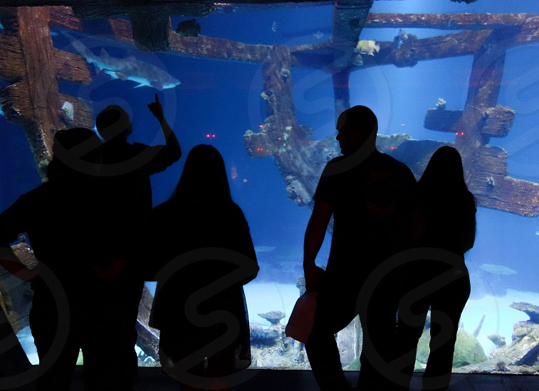 Sharks! Aquarium Wonder photo
