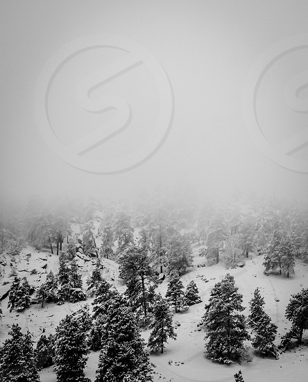 Snow into fog. (B&W) Taken west of Boulder Colorado in the Rocky Mountains. photo