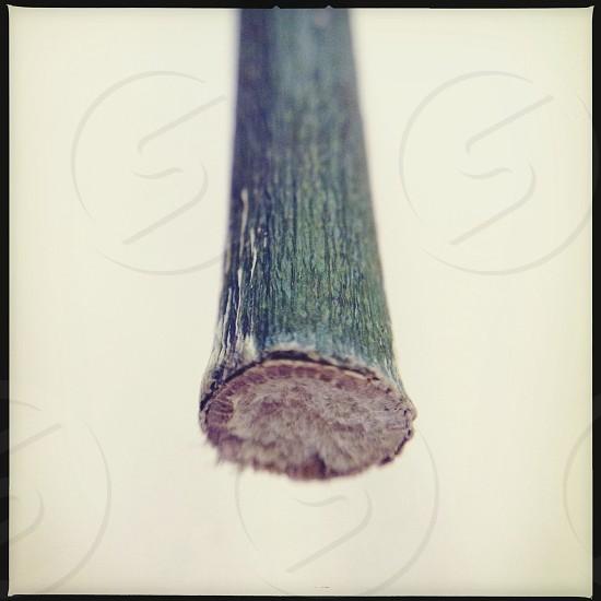 Green stem photo