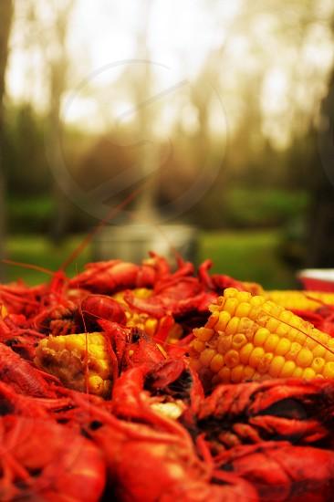 Crawfish Cajun food springtime in Louisiana  photo