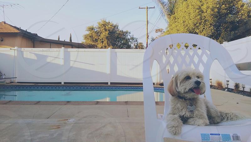 My dog Roxy photo