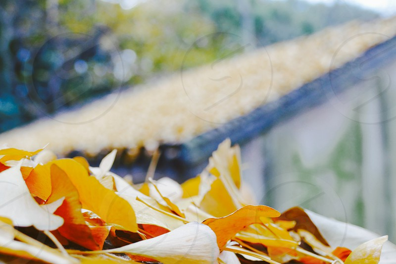 Suzhou photo