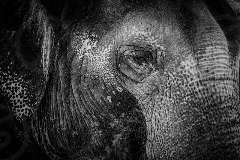 elephant zoo monochrome close up animal wildlife photo