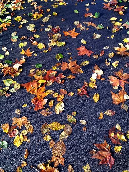Bye Autumn  photo