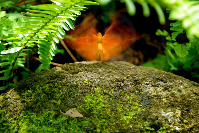 A butterfly launching into flight.  Nature Phipps Conservatory. photo