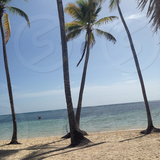 Holiday in Dominican Republic  photo