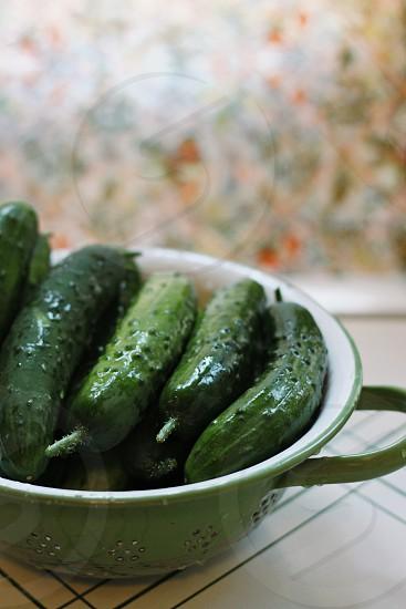 freshly picked cucumbers in a vintage colander photo