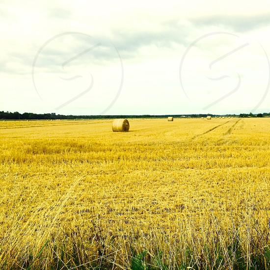 hay bales field yellow horizon sky photo
