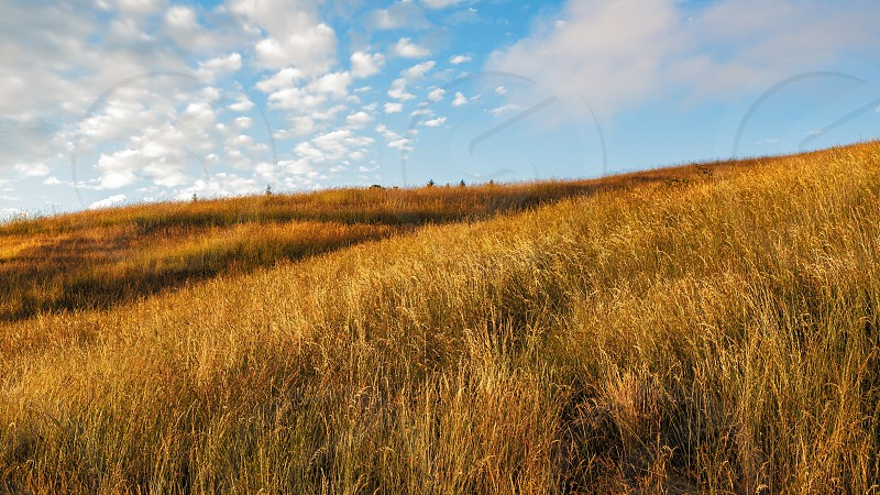 Color image of a grassy hillside in northern California. photo