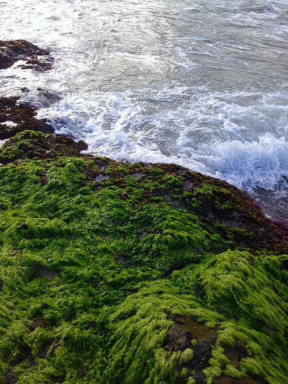 North Coast Trinidad #caribbean #island #green photo
