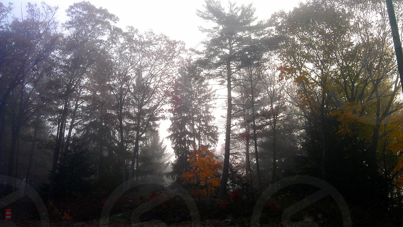 Foggy Fall morning. The Sun rising behind the trees with just a hint of color.  photo