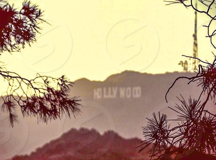 Hollywood Hills Skyline photo