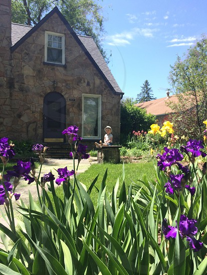Irises galore☀️ photo