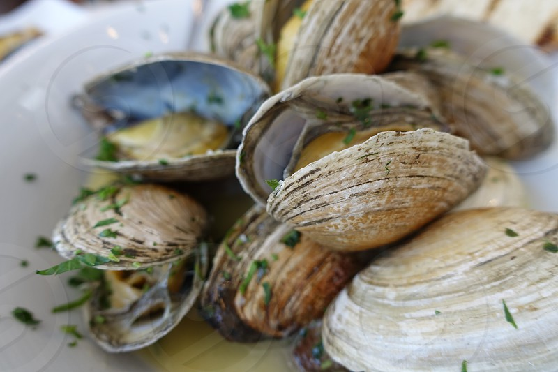 Steamed clams with white wine sauce and fresh herbs in a white bowl steamers.  photo