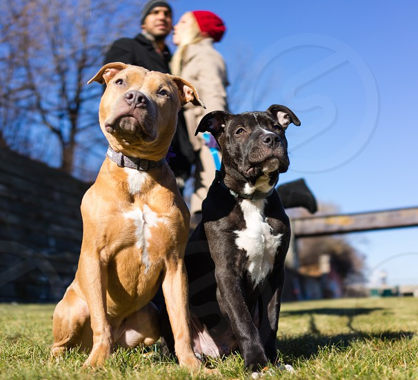 Sunny dogs. photo